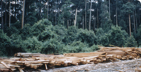 Logging operations in Brunei