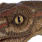 Coelophysis has you in its sights