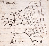 First evolutionary tree sketched by Darwin in 1837