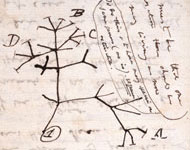 Tree of life diagram from Darwin's Transmutation Notebook B