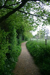 Darwin's thinking path at Down House © Karen James