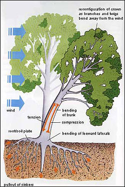 Diagram of a tree