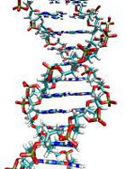 DNA double helix.
