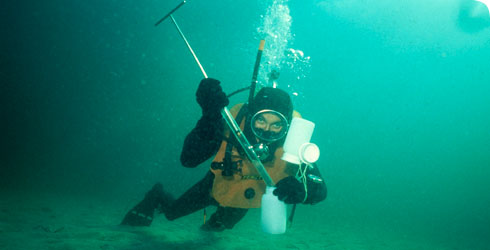 A diver collecting nematode worms