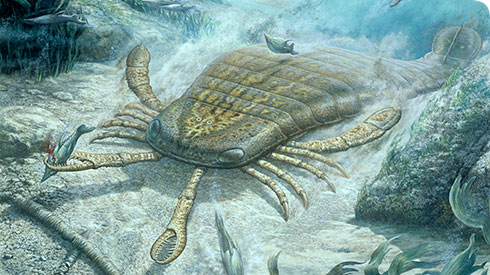 Artist's reconstruction of a scorpion-like eurypterid