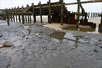 900,000-year-old footprints at Happisburgh, Norfolk