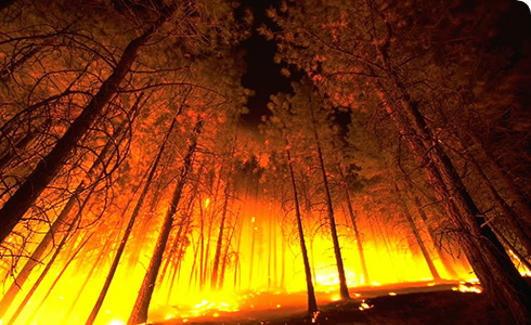 Forest fire © US Department of Agriculture