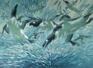 Great auk feeding frenzy, painting by Bruce Pearson