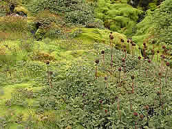 It was wonderful to see green vegetation again on a short visit to South Georgia © David N Thomas