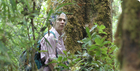 Sandy Knapp, Museum botanist, on a field trip in Panama