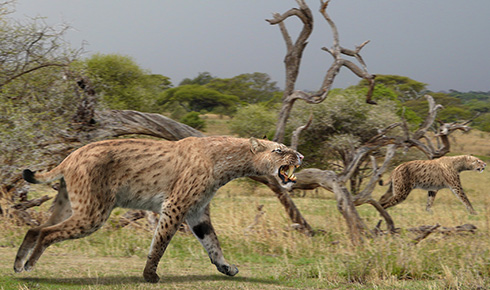Sabre-toothed cat, Homotherium latidens