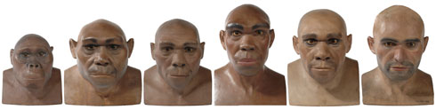 Model reconstructions of hominin (human-like) species
