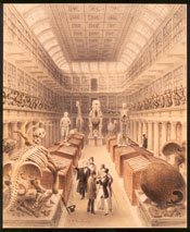 The Hunterian Museum at the Royal College of Surgeons © Royal College of Surgeons