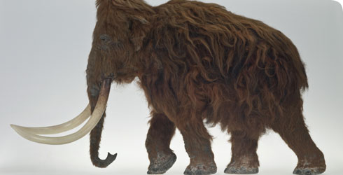 A model of the woolly mammoth found at Ilford, Essex, in England.