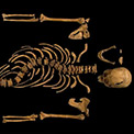 Richard III's suspected skeleton (copyright University of Leicester)