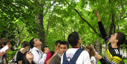 Pupils in a park surveying trees