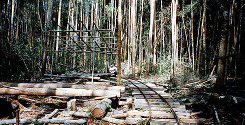 Logging operation in Brunei, photographed by Dr Gaden Robinson