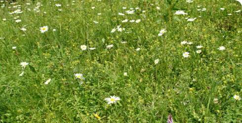 Meadow in the Museum's Wildlife Garden
