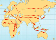 Map showing some of the migration routes our ancestors took