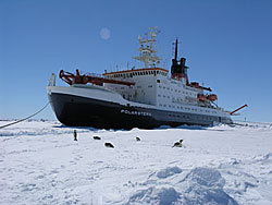 The Polarstern vessel is finally tied up to the ISPOL ice floe © David N Thomas