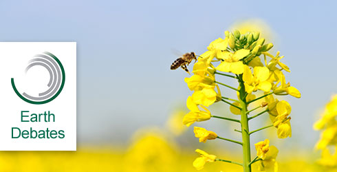 Bee pollinating a rape flower