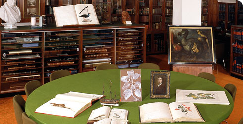 A collection of illustrations in the Museum's Rare Book Room.
