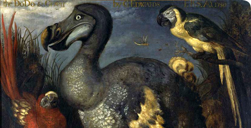 Iconic dodo painting by Roelandt Savery
