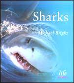 Book cover Sharks by Michael Bright
