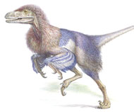 Sinornithosaurus, a flightless feathered dinosaur that lived in China