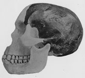 Arthur Smith Woodward's reconstruction of the skull of Piltdown Man