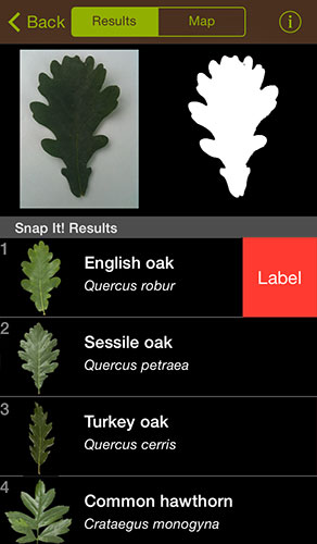 A screenshot from the Leafsnap UK app for iPhone