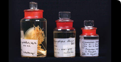 Specimens collected on the Challenger voyage