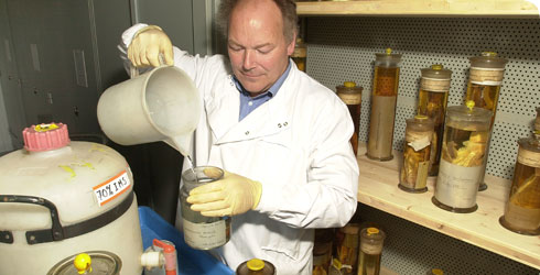 A scientist working on the spirit collection in the Museum's Darwin Centre