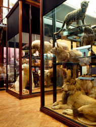 Specimens on display at the Natural History Museum at Tring