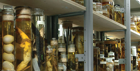 Zoological specimens in one of the storage rooms in the Darwin Centre at the Museum.