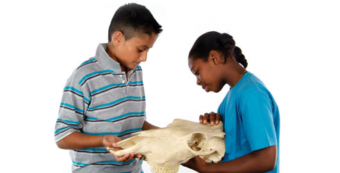 Children with a museum specimen