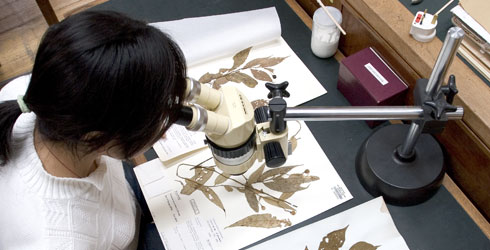 A botanist studying specimens at the Natural History Museum