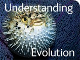 Link to Understanding Evolution