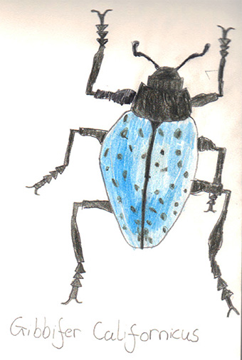Beetle by Billie Howell, age 9