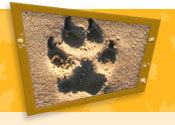 Dog pawprint
