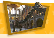 Dippy, in Central Hall