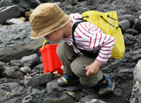 Looking for fossils among the rocks on a beach © Lyme Regis Fossil Festival