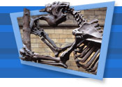 Giant Sloth skeleton