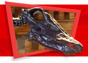 The skull of Dippy, the Diplodocus in Central Hall