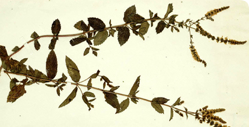 A Clayton herb sheet.