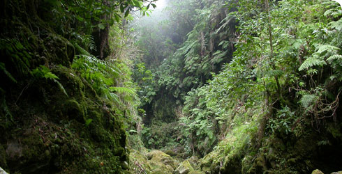 A fern gulley in Madeira