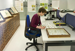 Working in the Angela Marmont Centre for UK Biodiversity
