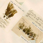 Herbarium sheet with numerous specimens of the moss Splachnum