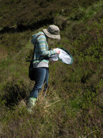Collecting Diptera