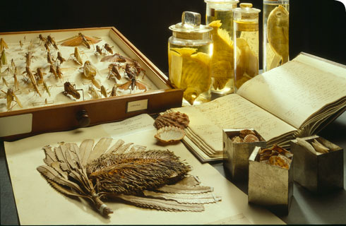 A selection of Museum specimens